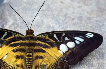 butterfly-3226534_1280